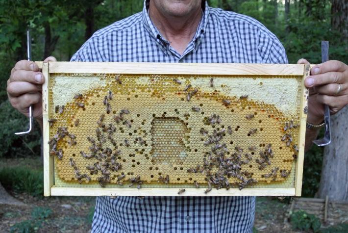Hester/Experimental Typography/Honeybee